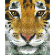 Tigrisfej (10,1x12,7cm)