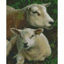 Bárány család 1 (20,3x25,4cm)