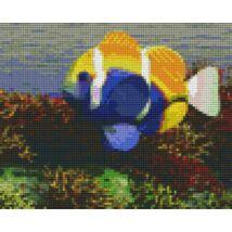Hal korallal (25,4x20,3cm)