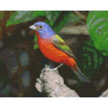 Bird on branch L (25,4x20,3cm)