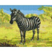 Zebra 2 (25,4x20,3cm)