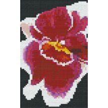Vörös-fehér orchidea (10,7x20,3cm)