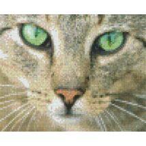Zöldszemű macska (25,4x20,3cm)