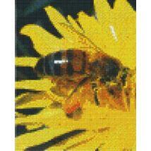 Méhecske (20,3x25,4cm)
