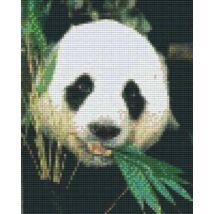 Panda bambuszt eszik 1 (20,3x25,4cm)