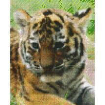Szibériai tigriskölyök (20,3x25,4cm)