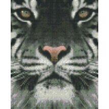 Fehér tigris (20,3x25,4cm)