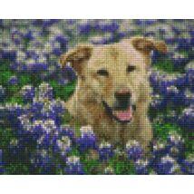 Kutya virágokkal (25,4x20,3cm)