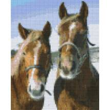 Brown thoroughbred horses (20,3x25,4cm)