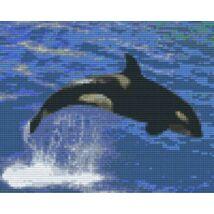 Delfin 5 (25,4x20,3cm)