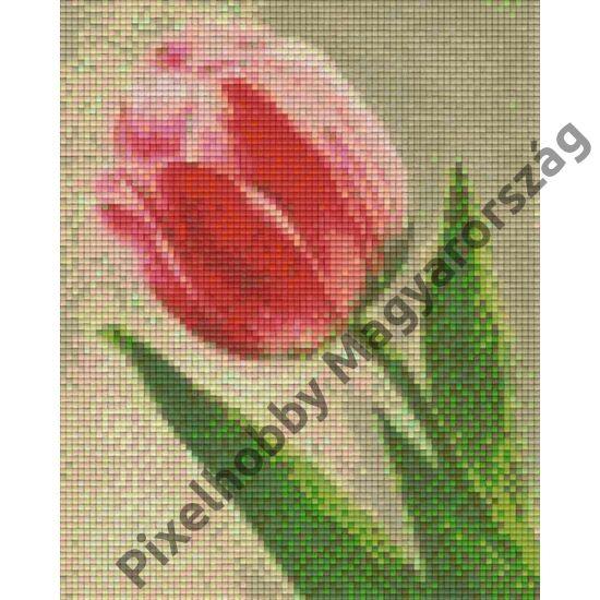 Tulipán (20,3x25,4cm)