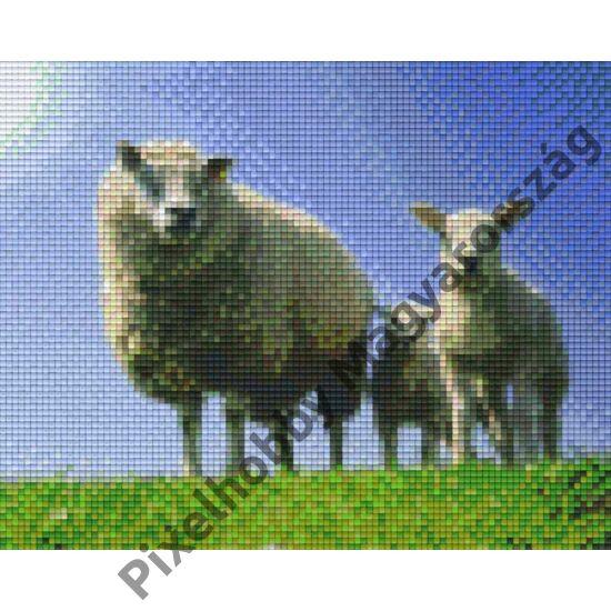 Bárány család 2 (25,4x20,3cm)