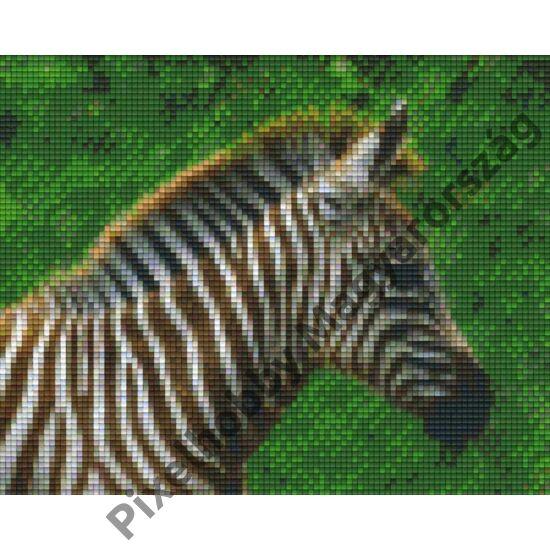 Zebra 1 (25,4x20,3cm)