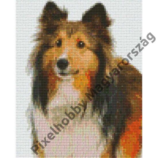 Collie kölyök (20,3x25,4cm)