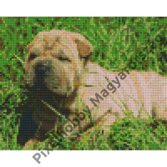 Angol Bulldog (25,4x20,3cm)